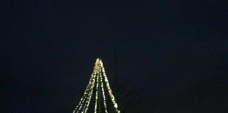 Weihnachtsbaum auf der Wolfsburg (Foto: Stadtverwaltung Neustadt)