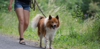 Symbolbild, Hund, Gassi gehen, © Holger Knecht