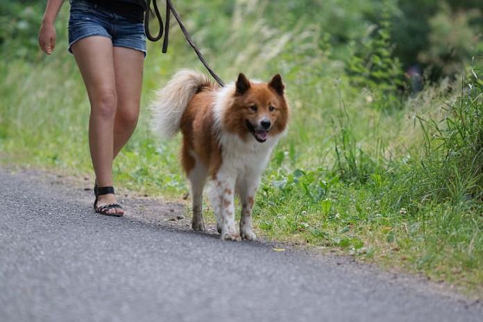 Hund, Gassi gehen, Gift, Köder © Holger Knecht
