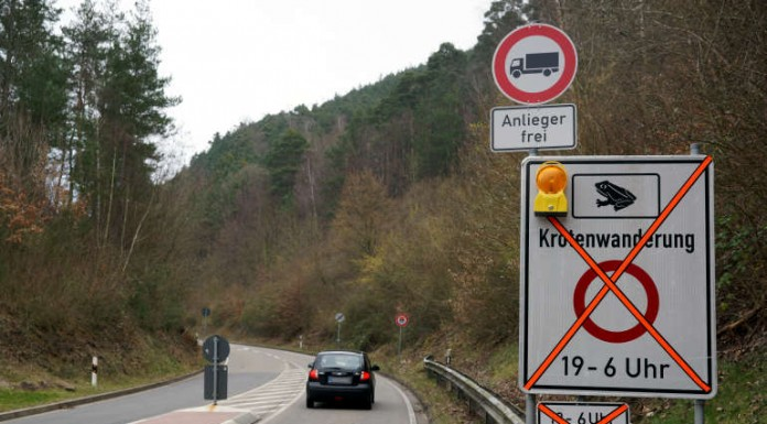 Hinweisschild auf Krötenwanderung K 16 (Foto: Holger Knecht)