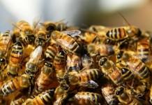 Symbolbild Bienen
