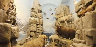 Arktis-Diorama im Hessischen Landesmuseum Darmstadt (Foto: Wolfgang Fuhrmannek, HLMD)
