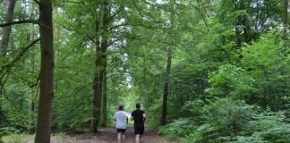 Laufen durch den Dossenwald (Foto: Stadt Mannheim)