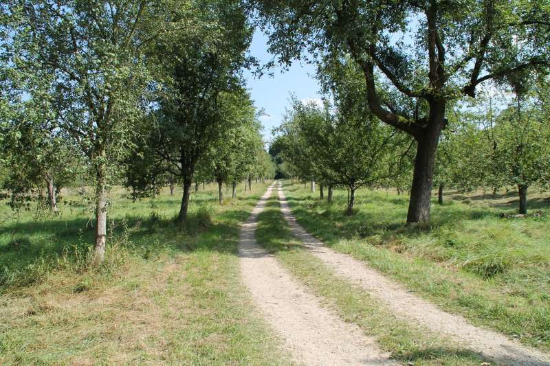 Reißinsel - eine natürliche Auenlandschaft (Archivbild 2013, Foto: Stadt Mannheim)