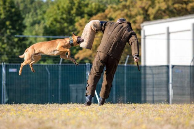 Diensthundeausbildung (Foto: Stephan Dinges)