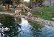 Uschi(Wasser), Benni und Gudrun (rechts). (Foto: Zoo Heidelberg)