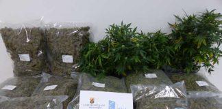 Sichergestelltes Marihuana und Haschisch sowie sichergestellte Cannabis-Pflanzen