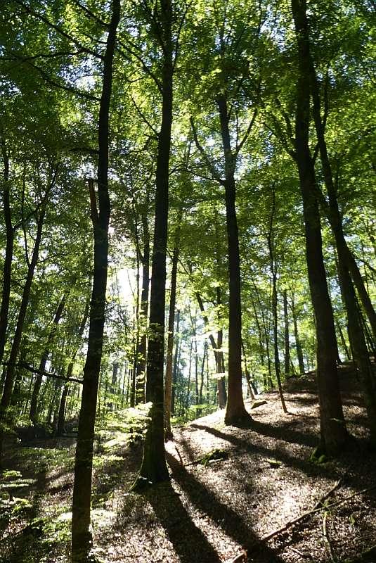 Wald sich selbst überlassen: Kernzonen im Pfälzerwald (Foto: BV Pfalz)