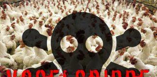 Alle Infos zur aktuellen Vogelgrippe im Südwesten