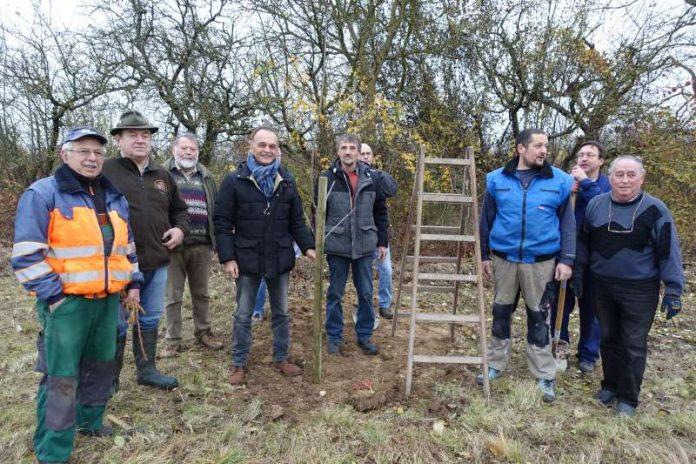 In Lingenfeld wurden Obstbäume gepflanzt (Foto: Kreisverwaltung Germersheim)