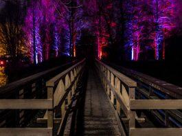 Winterlichter (Foto: Stadtpark Mannheim)