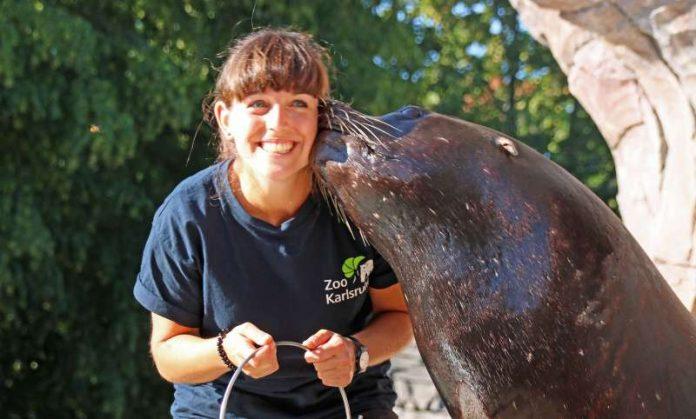 Die Karlsruher Zootierärztin Hein auf Schmusekurs bei den Robben (Foto: Zoo Karlsruhe)