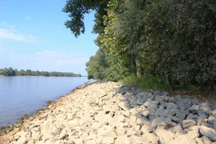 Rheinufer mit Steinschüttung in seiner heutigen Form (Foto: RP Darmstadt).