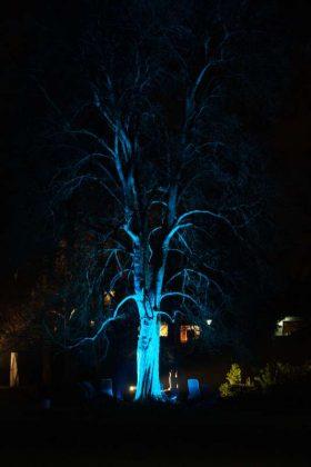 Ein illuminierter Baum (Foto: Holger Knecht)