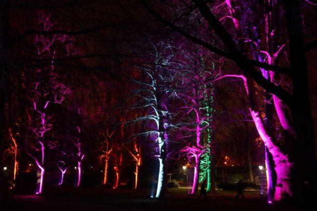 Illuminierte Bäume (Foto: Holger Knecht)