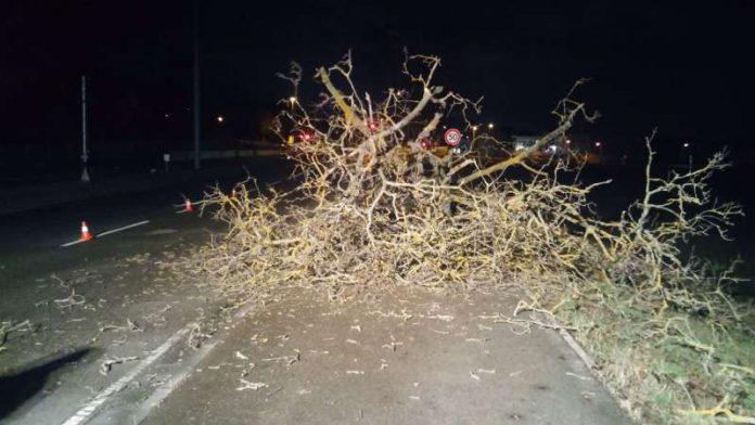 In Lützelsachsen blockierte ein Baum die Straße (Foto: Carsten Dübler)