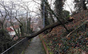 Sturmschaden Bad Kreuznach