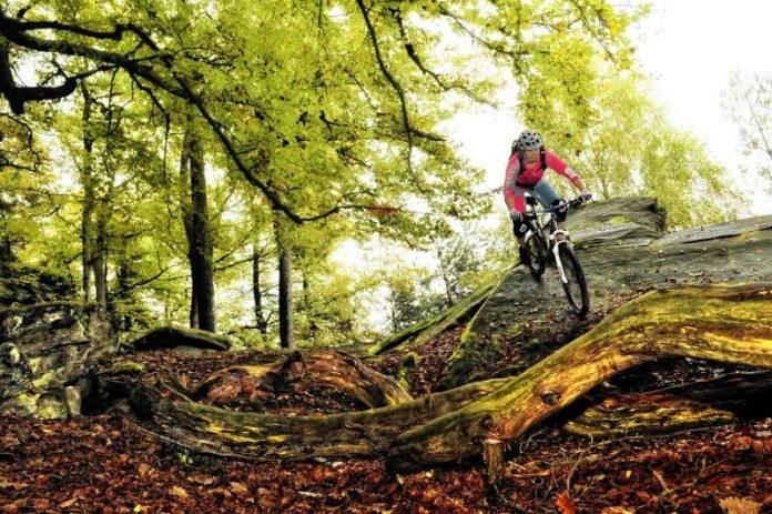 Der Pfälzerwald, das größte zusammenhängende Waldgebiet Deutschlands, bietet eine ideale Mountainbike-Topografie mit abwechslungsreichen Höhenprofilen. Auf über 300 Kilometern übersichtlich ausgeschilderten Touren, verfügt der Mountainbikepark über eine Vielzahl verschiedener Wege mit schmalen Pfaden, steilen Anstiegen und technisch anspruchsvollen Abfahrten. Eindrucksvolle Aussichten wechseln sich mit interessanten Sehenswürdigkeiten ab und urige Hütten bieten den Bikern eine herzliche Bewirtung. (Pfalz.Touristik e.V.)