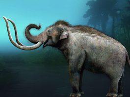 Illustration Mammut (Foto: SMNK)