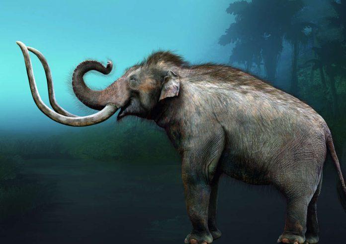 Mammut (Illustration Sergio de la Rosa)