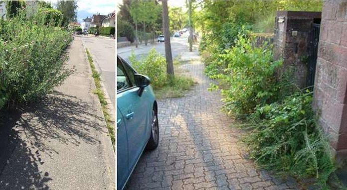 Das Zurückschneiden oder Entfernen dieser Sträucher ist Sache der Anlieger. (Foto: Stadtverwaltung)