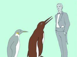 Der Waipara-Riesenpinguin im Größenvergleich zu einem Kaiserpinguin (dem größten lebenden Pinguin) und einem Menschen. © Senckenberg