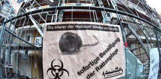 Schild der Mieterinitiative Wallauer Straße zu Rattenplage (Foto: Rainer Rüffer)