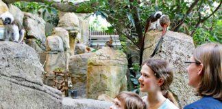 Eine Gruppe beobachtet im Exotenhaus die Lisztäffchen. In diesem Jahr waren bereits mehr Besucher im Zoologischen Stadtgarten als je zuvor. (Foto: Stadt Karlsruhe)