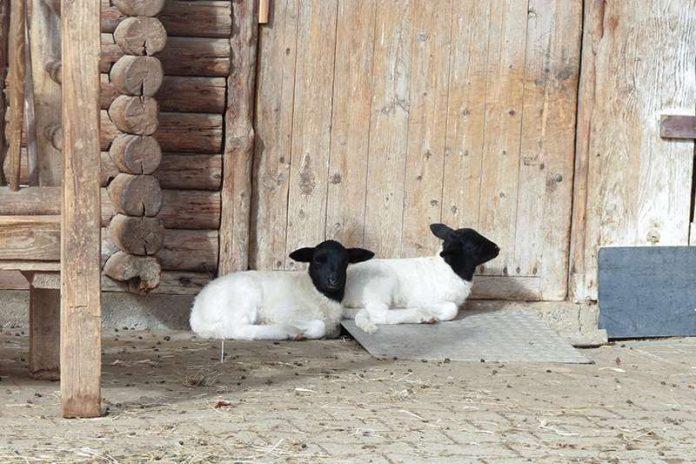 Die Jungtiere genießen die ersten wärmenden Sonnenstrahlen (Foto: Zoo Heidelberg)