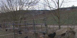 Endlich Freilauf: Nach den negativen Untersuchungsergebnissen wurde der Sperrbezirk in Eggenstein aufgehoben. (Foto: Landratsamt)