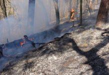 Waldbrand im Nerotal (Foto: Feuerwehr)