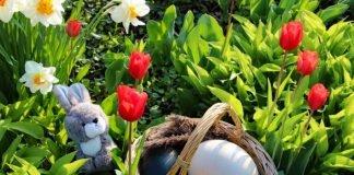 Am Ostersonntag dreht sich bei den Sonderaktionen für Kinder alles um das Thema Eier und Ostertiere (Foto: Zoo)