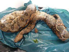 Eine Schlange wurde tot aufgefunden (Foto: Stadt Heilbronn)