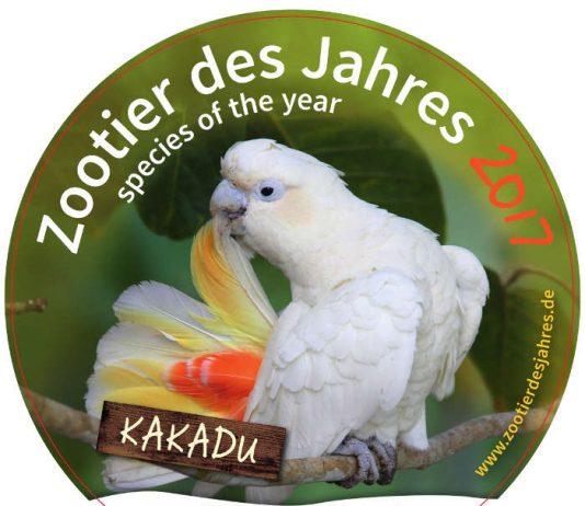 Der Kakadu wurde zum Zootier des Jahres gewählt (Foto: Zootier des Jahres)