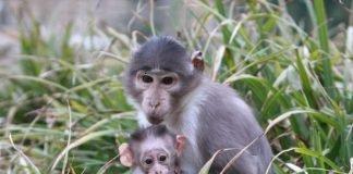 Affen (Foto: Zoo Landau)