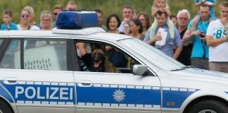 Diensthund im Polizeiauto (Foto: Holger Knecht)