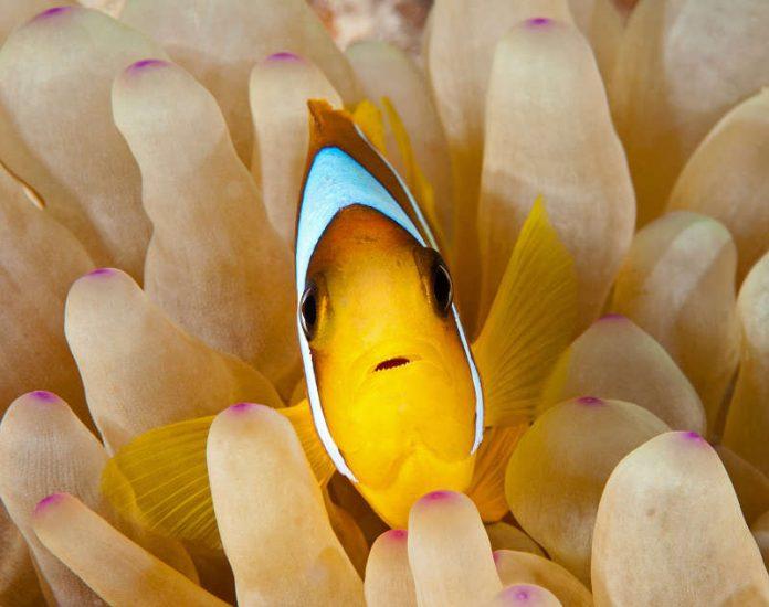 Unterwasserfotografie von Konstantin Killer
