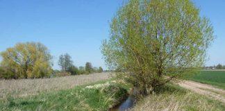 Triefenbach (Foto: Verbandsgemeinde Edenkoben, Fachbereich Natürliche Lebensgrundlagen, Bauen)