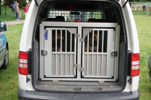 Polizeihunde im Polizeiauto (Foto: Holger Knecht)