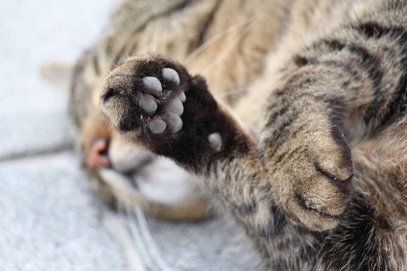 Symbolbild Katze © on Pixabay