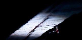 Moskitos sind das gefährlichste Tier auf der Erde – sie übertragen Krankheiten wie Malaria, Dengue, Zika und Gelbfieber und verursachen mehr Todesfälle als jedes andere Lebewesen. (Foto: Ricardo Hantzschel/BASF)