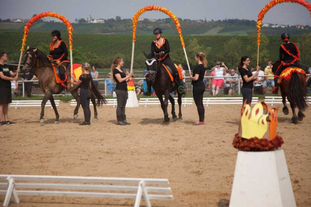 Sohw Wettkampf Pferd