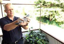 Feuerwehrmann Karsten Fath rettet Taube