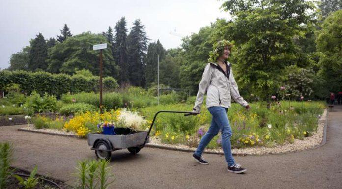 Zum Sommerfest im Botanischen Garten trägt man selbst geflochtene Blütenkränze. (Foto: Stefan F. Sämmer / JGU)