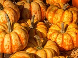 Kürbis im Herbst (Foto Pixabay)