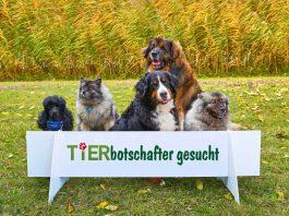 TIERisch gut und Zoo Karlsruhe suchen Tierbotschafter. (Foto: KMK/Jürgen Rösner)