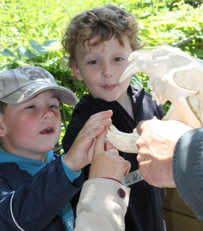 Kinder beim Berühren von Tierschädeln (Foto: Zoo Landau)