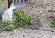 Albino und Nachwuchs (Foto: Zoo Landau)