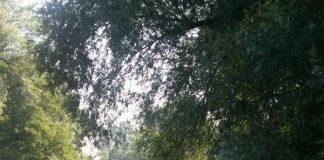 Bäume am Rehbach (Foto: LUKOM)