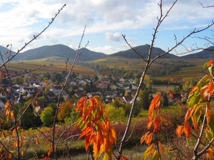 Wunderschöne Pfalz: Die Region der Süd- und Vorderpfalz hat für Einheimische, aber auch für Touristinnen und Touristen viel zu bieten. (Foto: Stadt Landau in der Pfalz)
